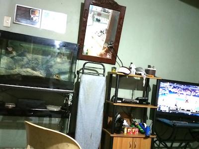タコ部屋の水槽とテレビ