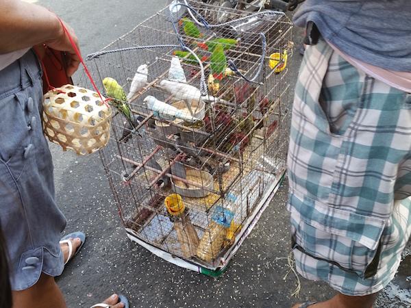 鳥を売る業者