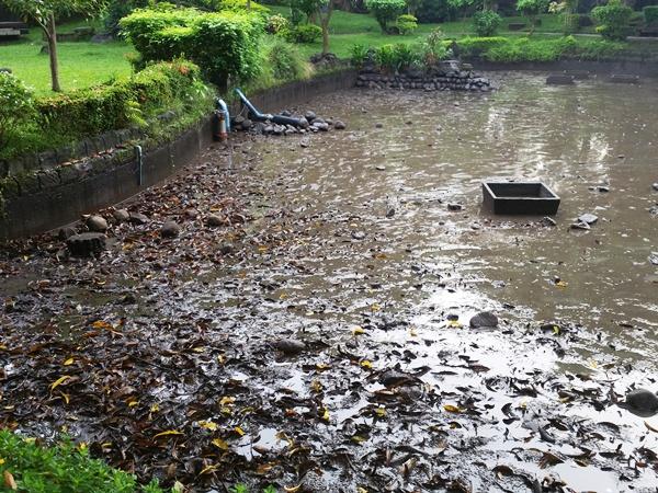 池に残ったヘドロや落ち葉