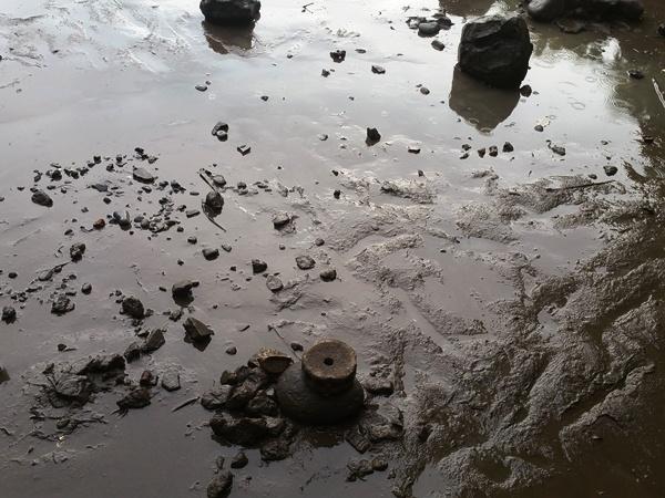 ジャパニーズガーデンの池