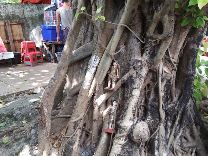 Bodhi tree on Shwedagon Road