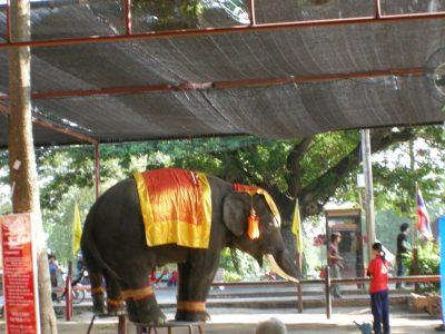 タイの象乗り