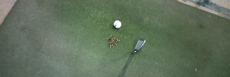 人工芝上の蛾