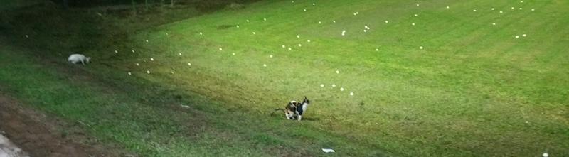 敷地内の猫