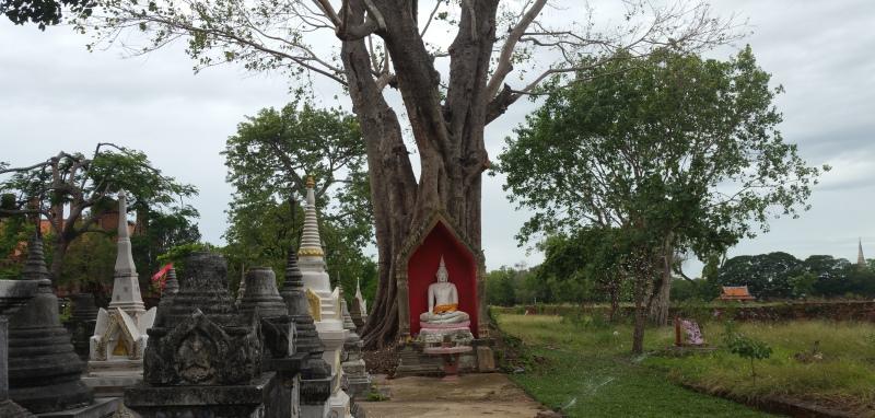ワット・タミカラットの白い仏像