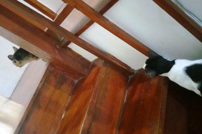 階段を上る猫