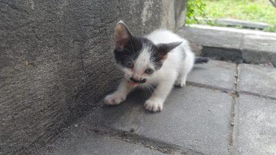 サウスターミナルの猫