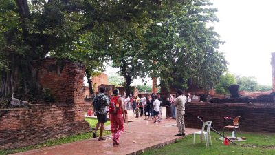 People heading for the Buddha's head at the root of a tree