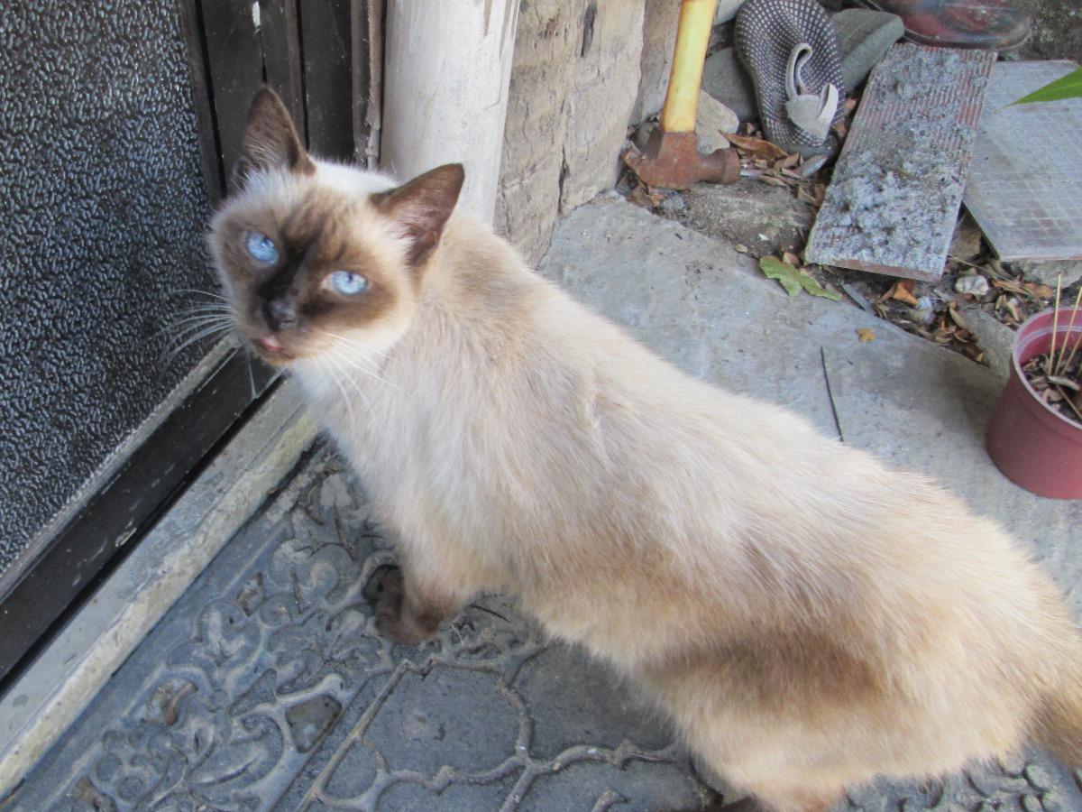 プエルトガレラの猫