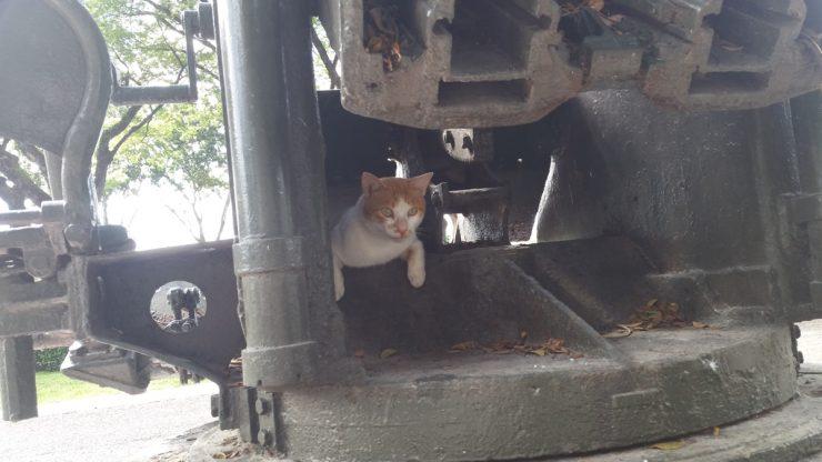 高射砲の猫