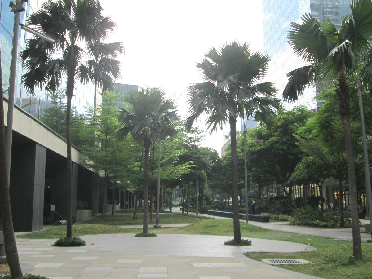 フィリピンのオフィス街に生えるヤシの木