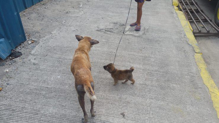 野良犬の親子