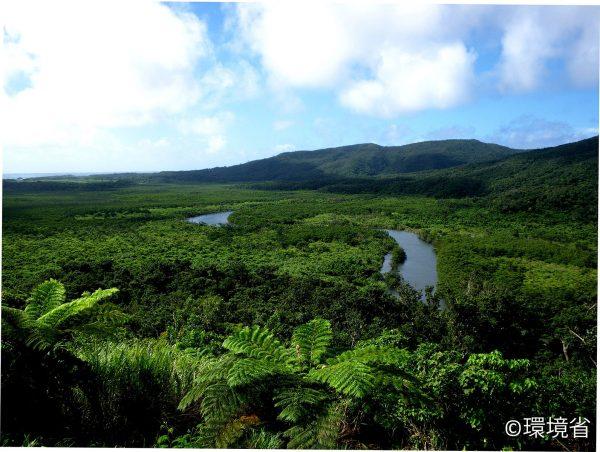 西表島仲間川のマングローブ林